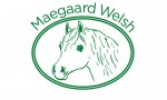 Maegaard Welsh, stutteri med Welsh Mountain ponys